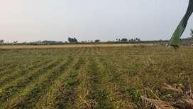 Agriculture land sale 1.5 acer per sent 50000  Chengalpattu
