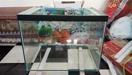 Aquarium 53x40x40 baru