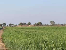 AGRICULTURE LAND FOR SALE - FERTILE LAND RAJANPUR