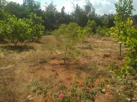 Land for sale 75, 50 cents