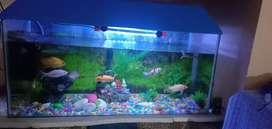 Fish tank aquarium 4500