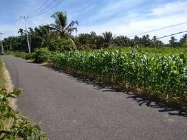 TANAH STRATEGIS lokasi perumahan berkembang batang sariak ketaping