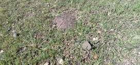 1/2acre form  land Najangudu to T narsipura 29/-p/sq