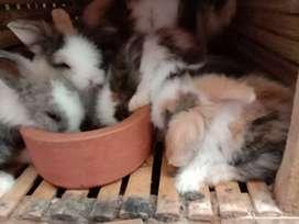 Kelinci lucu sehat lincah