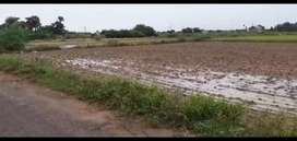 Agriculture land sales elavur