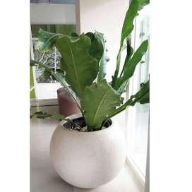 Pot Bunga Taman Cantik dan Mewah Handmade Terazzo