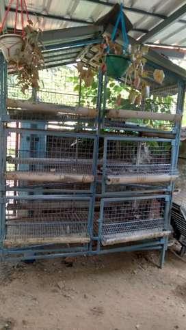 Kozhikoodu(chicken cage)