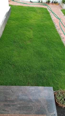 Landscaping, regular maintenance, Bangalore,pearl grass paving