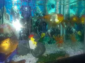 6 fishes big tail fishs with full set with stand 3 foot glass full set
