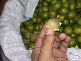 Matoa jenis kelapa