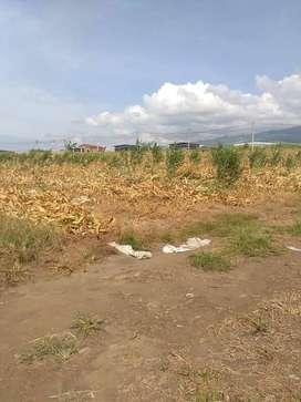 Lahan Pertanian dan industri Harga Murah Rp 5 Juta / 100 m2 - SHM