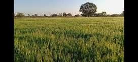22 Acre Farm Land in Berasia only 5 lacs per acre