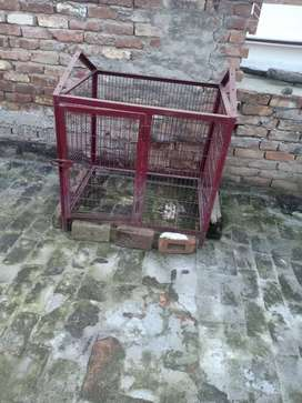 Dog cage available city local pinjra