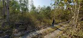 [JUAL MURAH] Tanah 1/4 Hektar, Pinggir Jalan, SHM, Banyak Pohon Jati