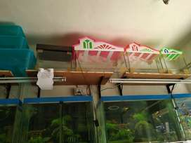 All types of fish tank, machli ghar available.