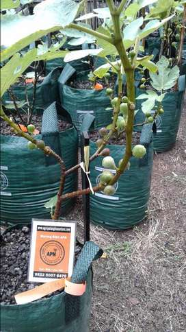 Pot tanaman zaman now (planter bag)