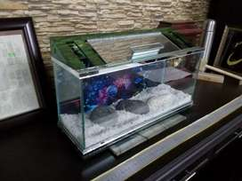 Mini table Aquariums