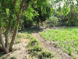 Farm for sale at padra