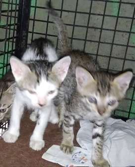 Cats and kittens are available.