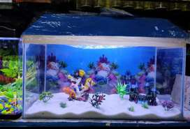 All types of Aquariums, fish food available