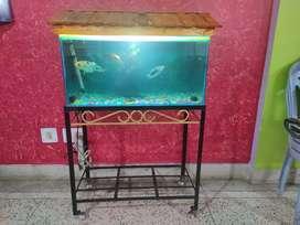 Fish Aquarium just one year old