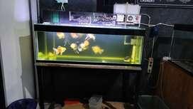 Aquarium akuarium 120*40*45 + meja & filter full set