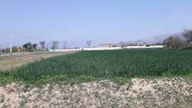 55 Kanal Smooth Agricultural Land For Sale
