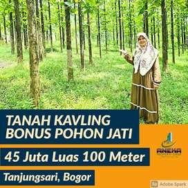 Jual Tanah Murah Pinggir Jalan Propinsi Bisa DiBangun Bonus Pohon Jati