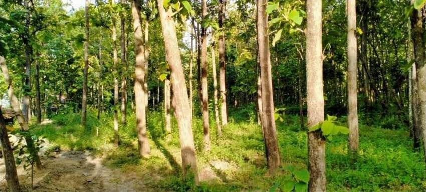 Jual Tanah Perkebunan Jati 0