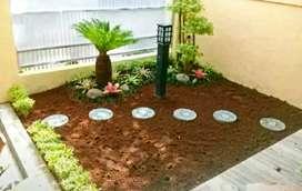 Hiasan Taman Jual Rumput Gajah Mini Pembuatan taman