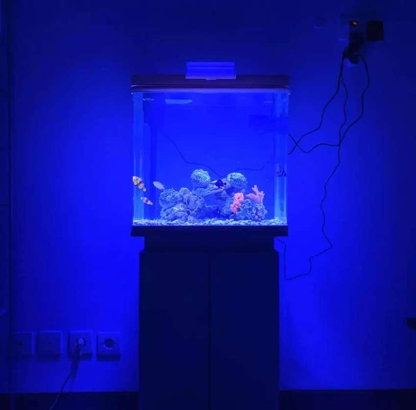 Aquarium Ikan Laut Boyu dan Kabinet 0