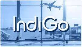 urgent indigo new jobs / 8th, 10th, 12th Pass to graduate & Postgradua