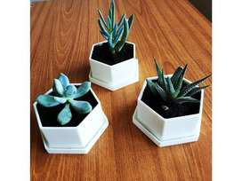 Small Pots for planting