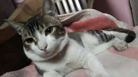 Male  cat for adoption.