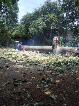 Tebang pohon dan potong rumput