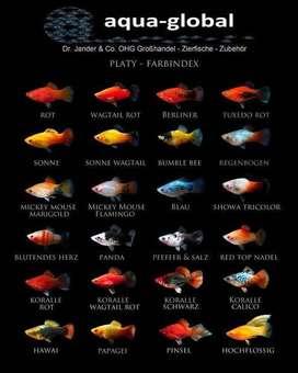 Gold fish, guppy, platy, molly, angel, oscar