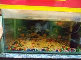 2/1 aquarium with filter