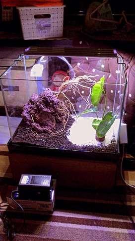 akuarium aquarium aquascape bending fullset baru