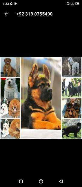 All breed available dogs