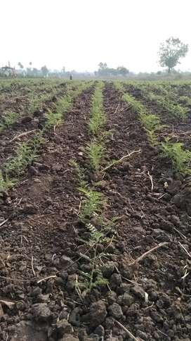 एक सारख शेत आहे, विहीर पण आहे , काळी जमीन आहे , कॉल करा, आठ86659617आठ