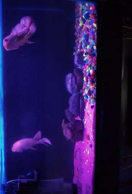 3 fit and 2fit fish tanks with 3fit stand and all fishes