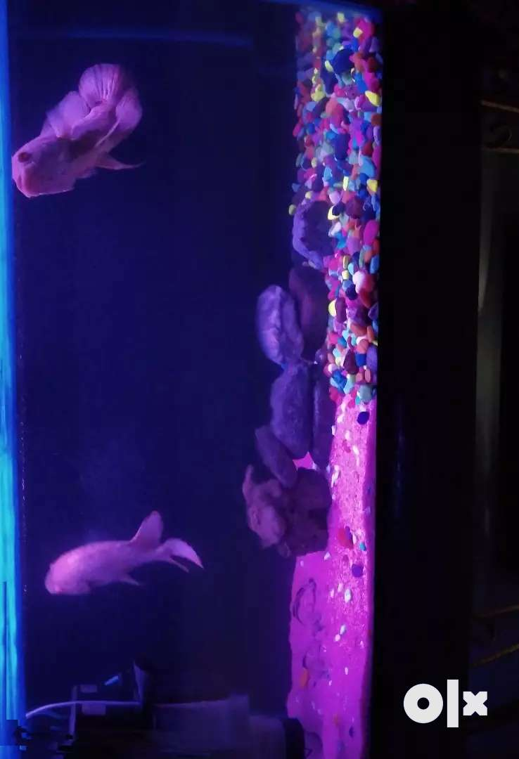 3 fit and 2fit fish tanks with 3fit stand and all fishes 0