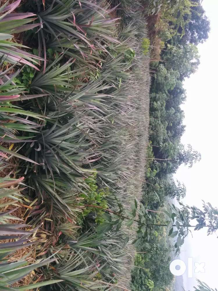 2.09 acres land for sale