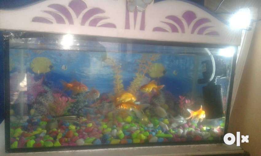 2 months new Aquarium all fishes and motor 0