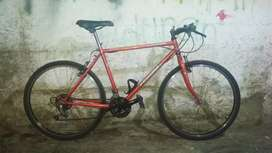 Sepeda Federal Torino Fit 2000