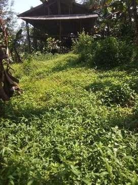 Jual tanah kebun + kandang murah subang