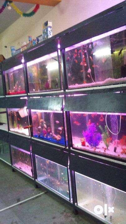 Aquarium fish tank 0