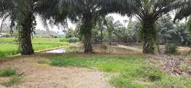 Tanah darat dan sawah
