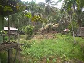TANAH berbentuk kolam dan RUMAH ada kandang ayam Kota Argamakmur