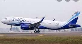 Jobs in indigo airlines urgent hiring